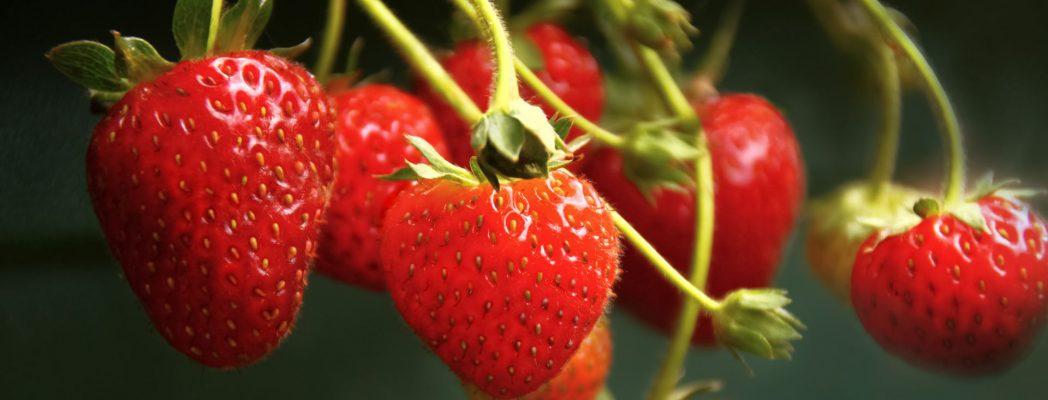 fresas, frescas, fotografia gastronomica, fotografia publicitaria, fotografia producto, fotografia profesional, Alicante