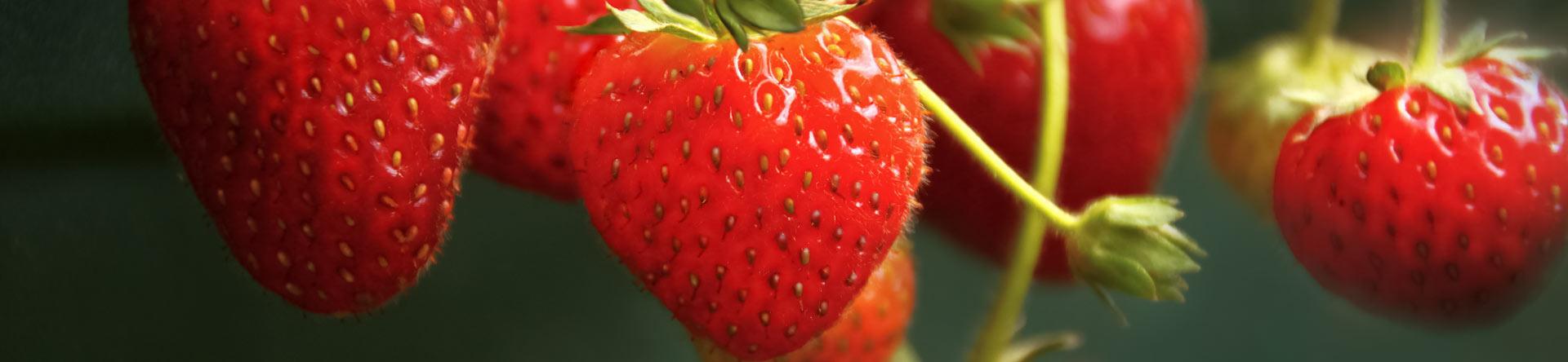 fresas, frecas, fruta, fotografia gastronomica, fotografia publicitaria, fotografia producto, fotografia profesional, Alicante
