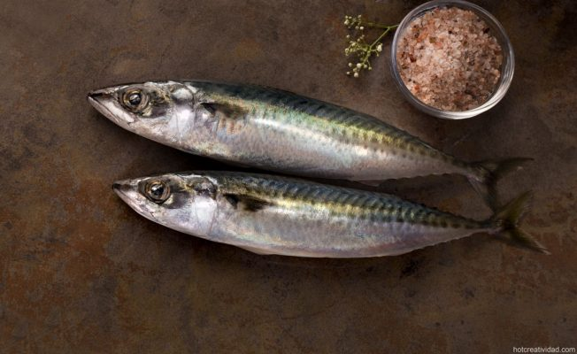 caballa fresca, pescado, fotografia gastronomica, fotografia publicitaria, fotografia producto, fotografia profesional, Alicante